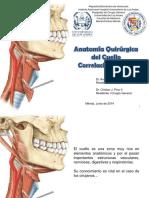 Cuello Anatomia Definitivo