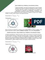 179222609-Formulas-y-diagramas-florales.docx