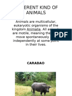 DIFFERENT KIND OF ANIMALS.pptx