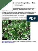20 Plante Antitantari
