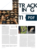 Karanth Tigers Scientific American Juy 2016