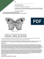 A HUMANISED BUTTERFLY NAMED LEDA MELANITIS | Interalia Magazine
