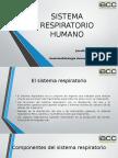 Anatomofisiologia Humana y Primeros Auxilios Control 3