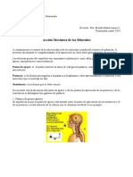 palancas-musculos-pdf.pdf