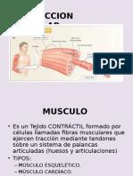 contraccinmuscular-.ppt