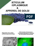 cyto1an-reticulum_endoplasmique_golgi.pdf