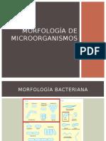2 Morfología de microorganismos.pptx