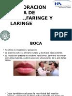 Exploracion Fisica de Boca,Faringe y Laringe