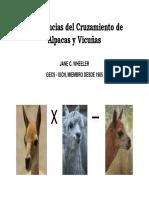 1.- Implicancias de Cruzamiento Alpaca y Vicuña Dra Wheeler