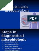 Mycobacterium tuberculosis Petrusan Sorina.ppt