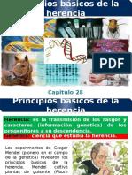 28. Los principios basicos de la herencia.pptx