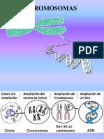 Mitosis y Meiosis GENETICA