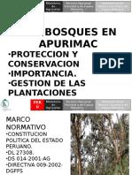 PLANTACIONES FORESTALES APURIMAC.
