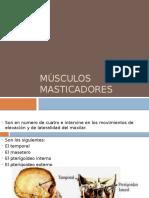 Músculos masticadores
