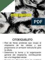 09 Citoesqueleto y Contraccion Muscular