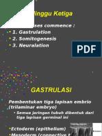 Embrio 5 -Minggu 4-8.ppt
