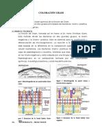 coloracion de gram.docx