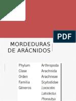 ARÁCNIDOS