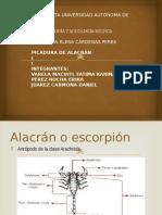 Alacran y Vivora