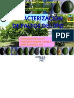 CARACTERIZACIÓN DE PALTOS.doc