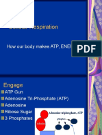 26 Biology 2_16_08 Cellular Respiration.ppt