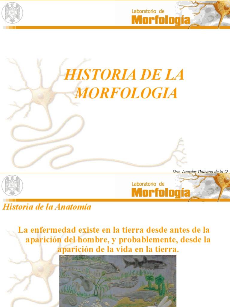 Historia de La Anatomia Borrador