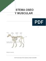 Tema Sistema Oseo Muscular