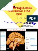 Neurofisiologia Do Processo de Dor
