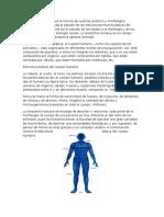Anotomía Del Cuerpo Humano