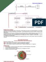 Mixovirus, Orthomixovirus, Paramixovirus y Virus Sincitial Respiratorio