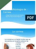anatomofisiologiade-140226104010-phpapp01.pptx