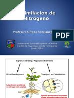 Asimilacion-Nitrogeno