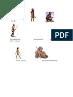Ramapitecidos Astrolopitecus Homohabilis Homo Erectus