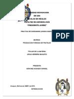 Zarzamora Reporte