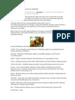 Frutas e Flores Dos Orixás Na