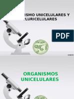 Organismo Unicelulares y Pluricelulares