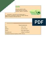 Azmafon-primeri-ugradnje