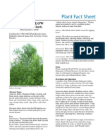 Facts About Black Willow Plant