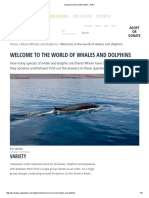 Cetacean Facts & Information - WDC