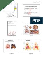 pdf alveoli