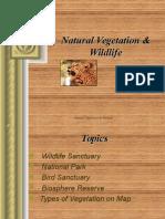 naturalvegetationwildlife_(1)