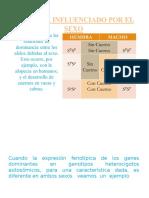 dagni (2).pptx