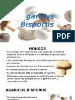 Agaricus Bisporus