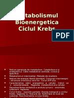 Metabolismul. Bioenergetica. Ciclul Krebs