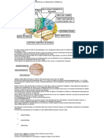 10 Clase de Neuroanatomia