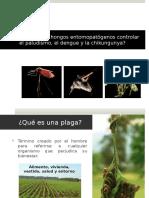 Pueden Los Hongos Controlar El Paludismo Dengue 2