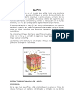 Documento de piel.docx