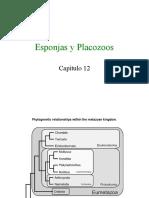 Esponjas y Placozoans