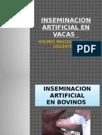 Inseminacion Artificial en Vacas Holmes Macias