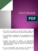 Ciclo Celular y Division Celular